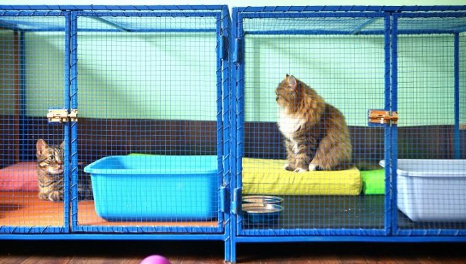 Two brown domestic cats resting in cages at cat shelter. This is actually cat sitter mansion where these cats stay while their owner are on vacation. Cats have all the privileges as that do at home.