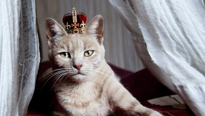 King cat on start your own country day