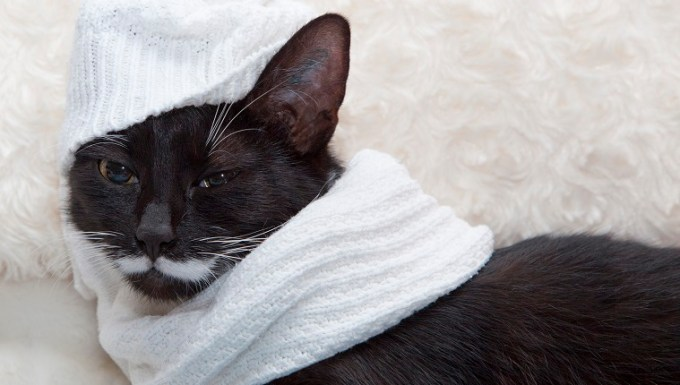 blach cat with wooly scarf and hat