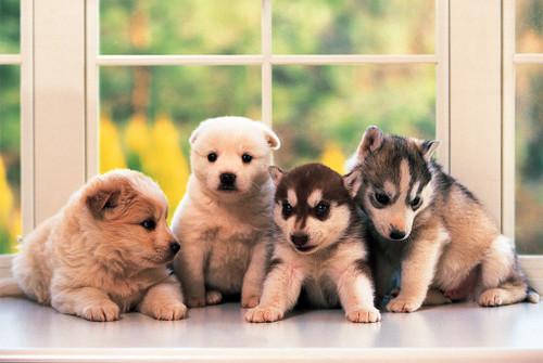 Tomax Little Doggies Jigsaw Puzzle