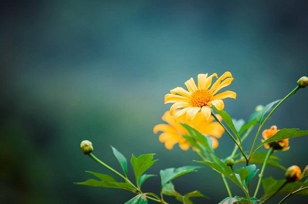 Các ngày cuối tuần trong tháng 10-11, vườn quốc gia Ba Vì trở nên đông đúc hơn khi có nhiều nhóm bạn trẻ và các gia đình tìm đến đây để ngắm hoa, chụp ảnh và dã ngoại trong không gian trong lành. Ảnh: Đặng Thùy Linh