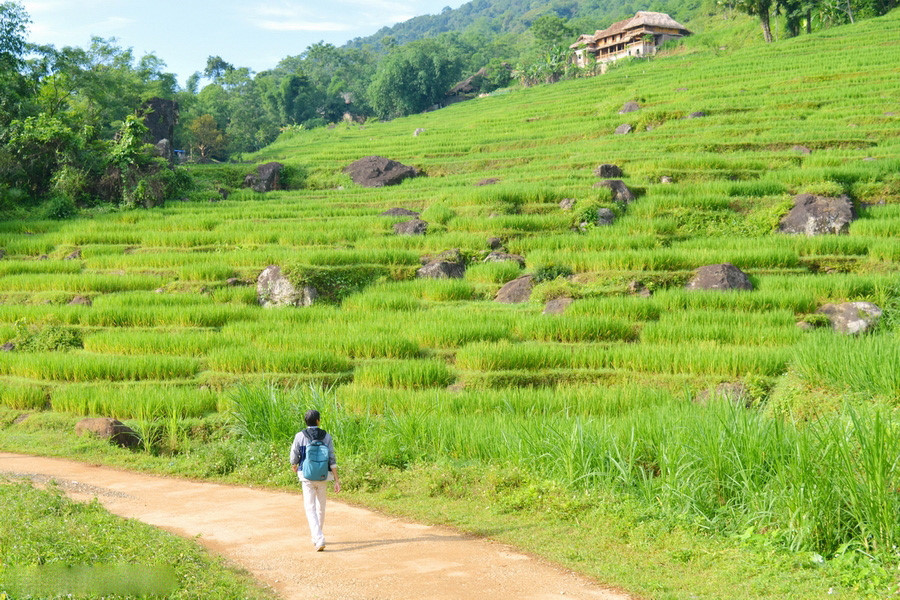 At the end of May 6, all the terraces carry a cool blue color. According to the people here, about 10 days everything will turn to a brilliant golden color. It was also at the time that Luong attracted many tourists.