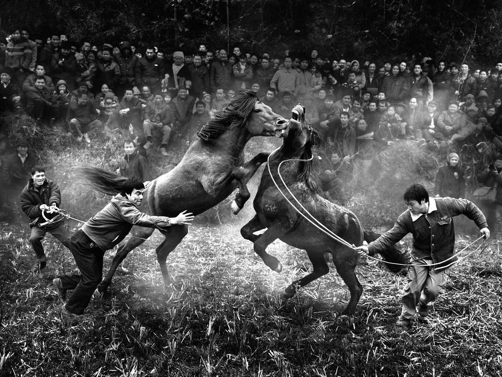photo awards, horses, (img credit: WPO)