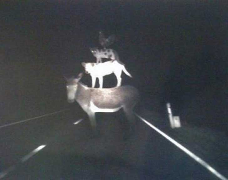 scary-creepy-real-photos-road-animals-on-backs