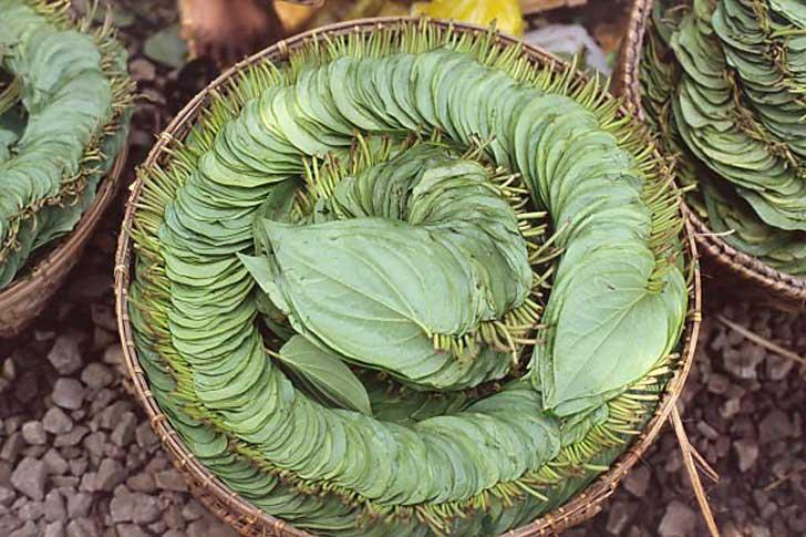 betel_leaves
