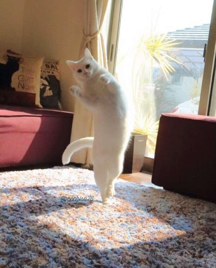 ballet-cat-japan-46 2