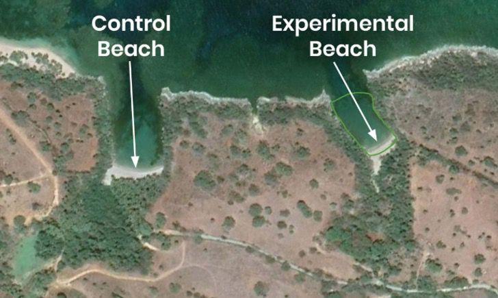 Captura de Pantalla 2020 07 03 a las 11.12.48 - Proponen usar arena verde para limpiar las playas. Capta el CO2 de conchas y esqueletos de moluscos