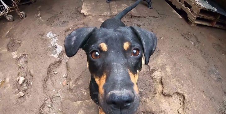 Refugio Perros0003 - La Casita de Lulú, el albergue que da futuro a cachorros abandonados. Inició con una perrita preñada