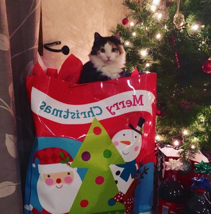 """Captura de Pantalla 2020 12 31 a las 12.21.46 - Gato volvió a casa para Navidad después de 5 años perdido en la calle: """"Parece un milagro"""""""