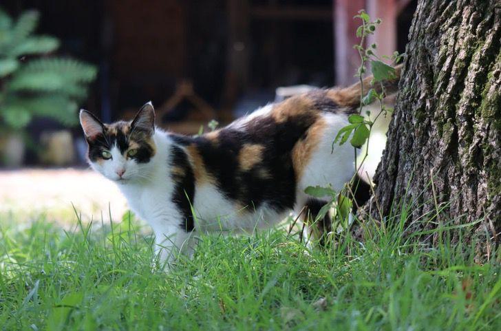 """Captura de Pantalla 2020 12 31 a las 12.24.24 - Gato volvió a casa para Navidad después de 5 años perdido en la calle: """"Parece un milagro"""""""