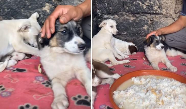 perros 4 - Cachorros rescatados lucen temerosos al llegar a su refugio. Su timidez es signo de sufrimiento