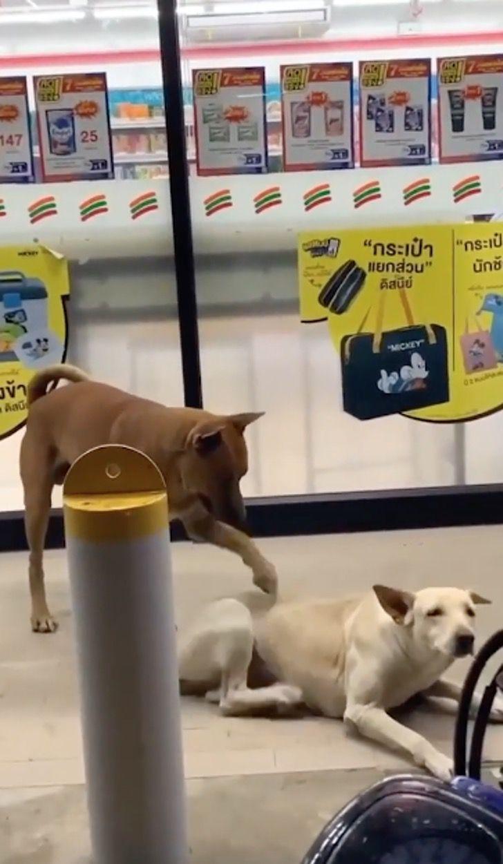 Captura de Pantalla 2021 01 04 a las 16.59.23 - Perrito le rasca la espalda a su compañero peludo cuando este no alcanza. Una amistad incondicional