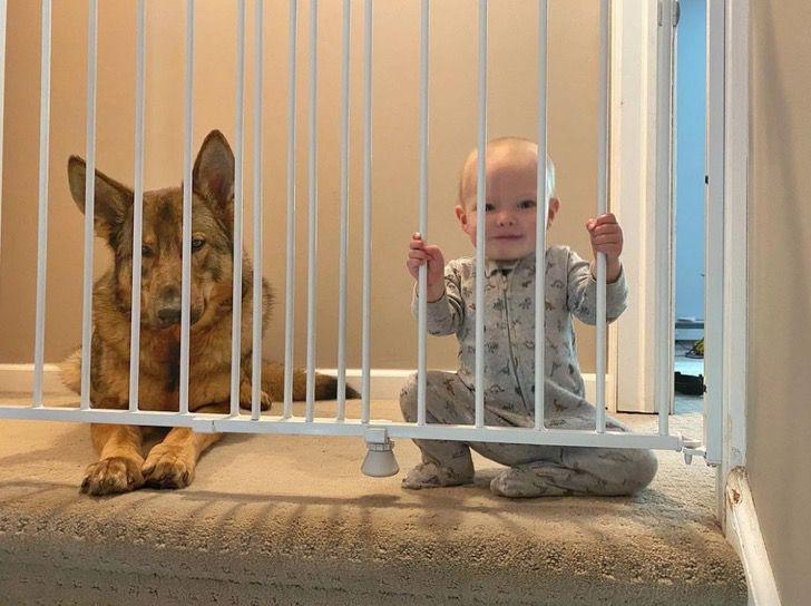 Captura de Pantalla 2021 01 28 a las 12.14.16 - Perro policía ama estar junto a la bebé de la familia. Es un guardián dentro y fuera de la casa