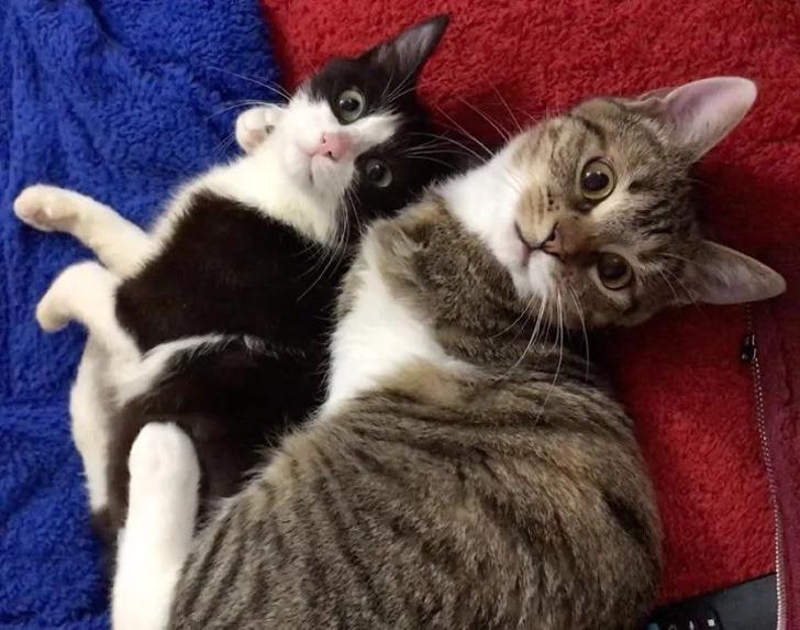 gata 3 patas acogio minino paralitico hicieron mejores amigos 4 - Gata con 3 patas acogió a un minino paralítico y se hicieron mejores amigos. Se acompañan y apoyan