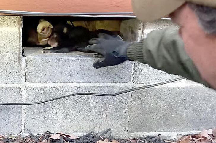 602ee76612d66.image  - Una osa y sus crías son reunidas luego de separarse en una cabaña. El dueño las recibió en su hogar
