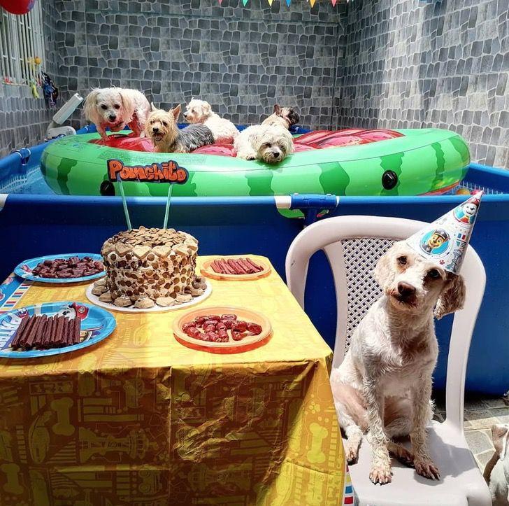 Captura de Pantalla 2021 03 03 a las 11.03.42 - Perrito celebró su cumpleaños en una piscina e invitó a sus amigos. No respetó el distanciamiento