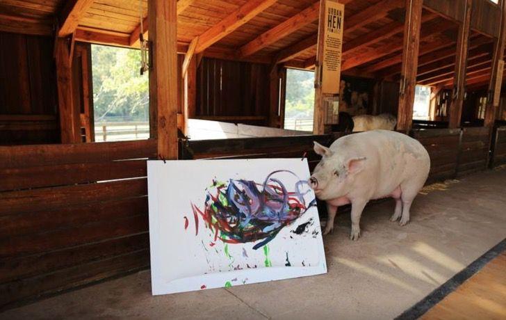 Captura de Pantalla 2021 03 24 a las 16.27.36 - Cerdita fue salvada de un matadero y se convirtió en una artista de la pintura. La llaman Pigcasso