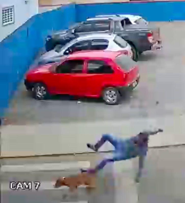 """perrito atropello hombre calle dejo fracturado 2 - Perrito """"atropelló"""" a un hombre en la calle y lo dejó fracturado. Estaba persiguiendo a sus dueños"""