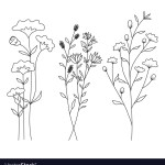 Hand Drawn Wild Flowers Isolated On White Vector Image