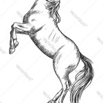 White Horse Rearing On Hind Hosketch Portrait Vector Image