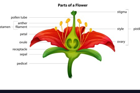 Flower structure quiz flowers near me flowers near me a popular flower anatomy quiz at best anatomy and parts of a popular flower anatomy quiz floral diagram wikipedia basic characteristics and significance ccuart Choice Image