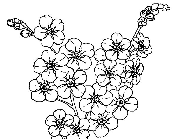 cherry tree flower coloring page coloringcrew com