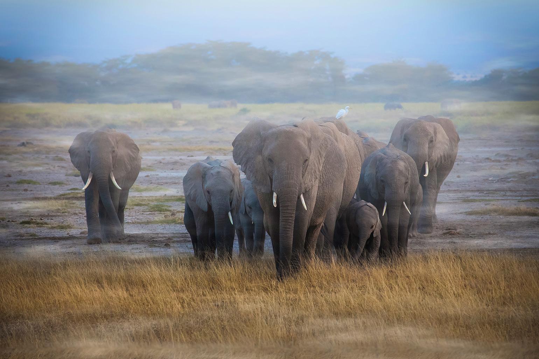 Botswana S Elephant Refugee Crisis Kids News Article