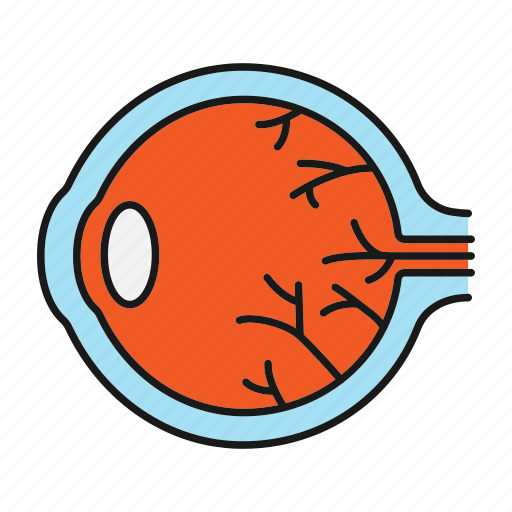 Anatomy, eye, eyeball, eyesight, infection, sore eye ...