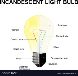 Parts of a modern incandescent light bulb Vector Image