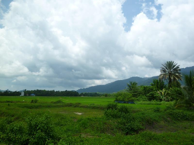 Homestay Padang Lalang Langkawi - Surroundings