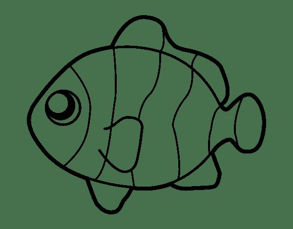 clownfish coloring page coloringcrew com