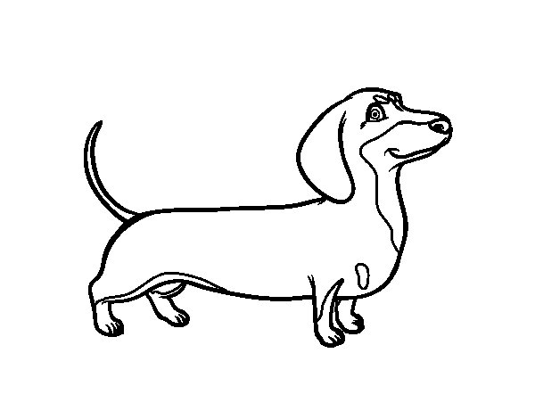 dachshund dog coloring page  coloringcrew