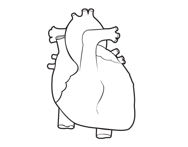 human heart coloring page  coloringcrew