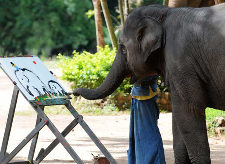 elephant-painting-his-own-image-funny