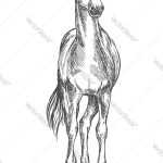 Standing Horse Sketch Portrait Royalty Free Vector Image