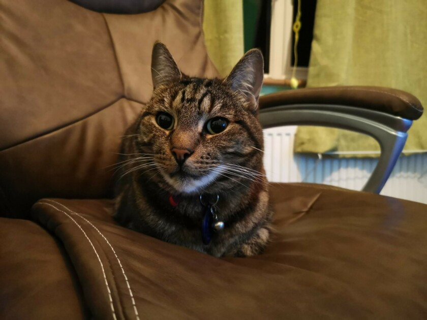 huawei mate 20 x camera sample cat