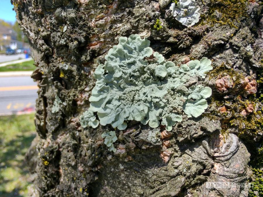 Motorola Edge Plus photo sample macro moss