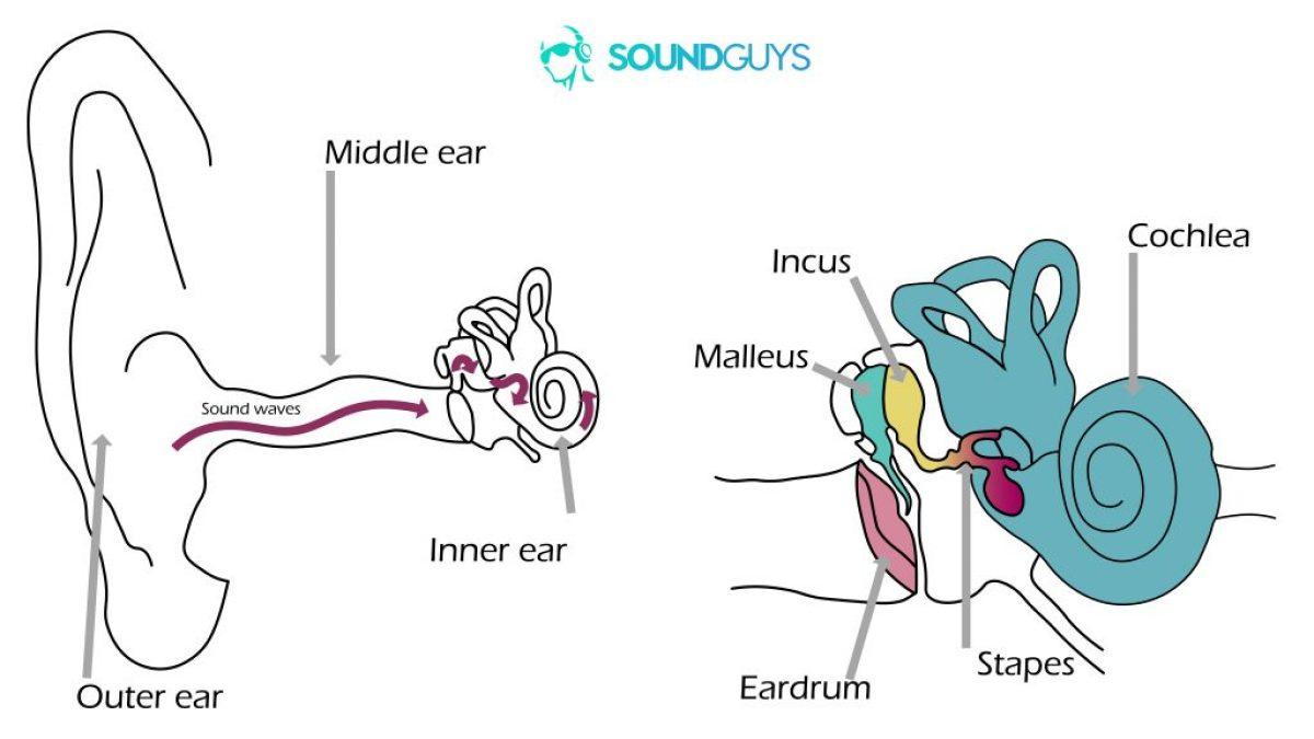 Две диаграммы. Один слева показывает, как звук распространяется в ухо, а правый - крупный план для среднего и внутреннего ушей.