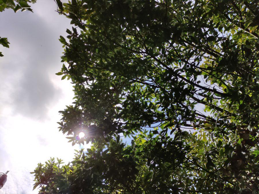 Тест Poco F2 Pro камера HDR тест дерева против бликов неба