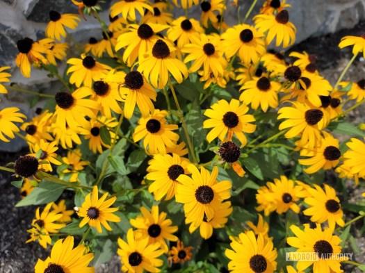 Samsung Galaxy Note 20 Ultra photo sample flowers