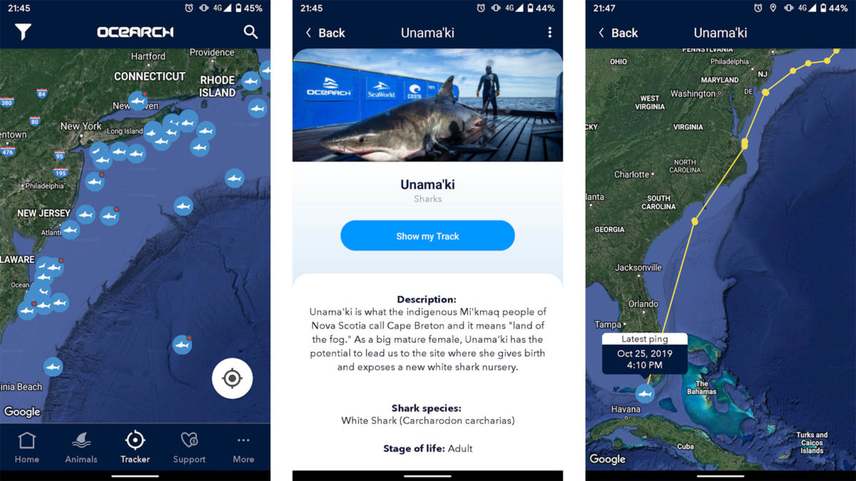 Screenshot of Shark Tracker by Ocearch