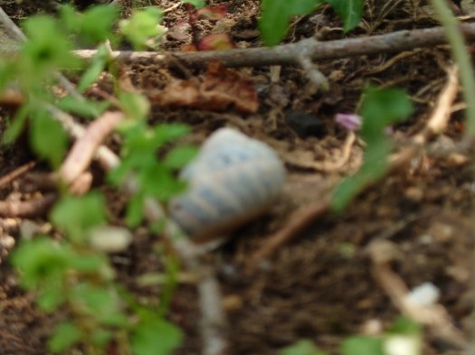 Picture of shell out of focus taken by Sony Xperia 1 III