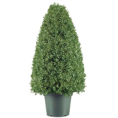 30 Potted Artificial Boxwood Topiary Tree ChristmasCentral