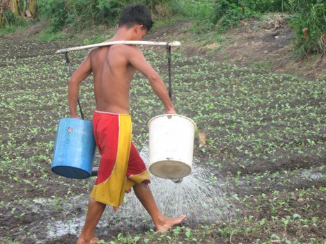 image of a young man watering the plots in the barrio