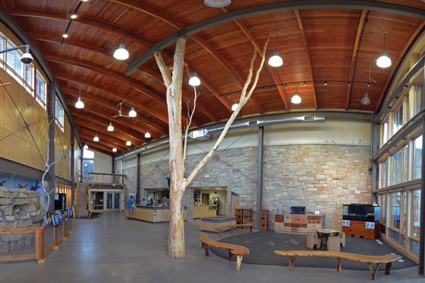 Scrap Trees Get New Life In Structural Systems Architect