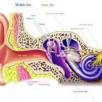 Oír con los oídos tapados