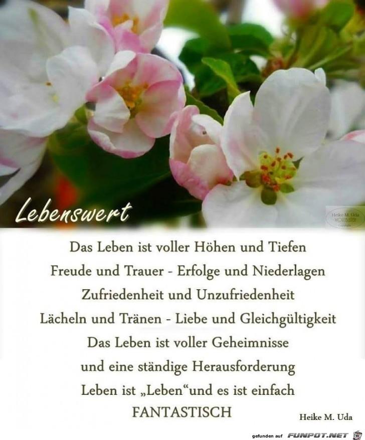 Kleeblatt Bilder Spruche