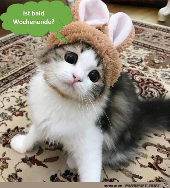 Lustige Tierbilder Wochenende Bilder Und Spruche Fur Whatsapp