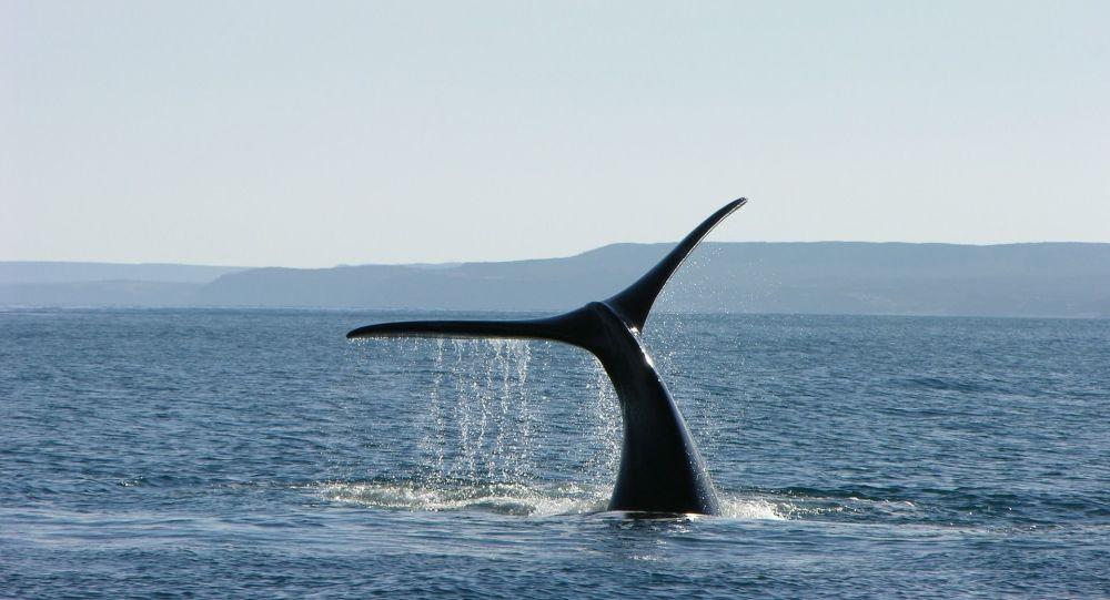 Une baleine salue des vacanciers dans l'Aude - vidéo