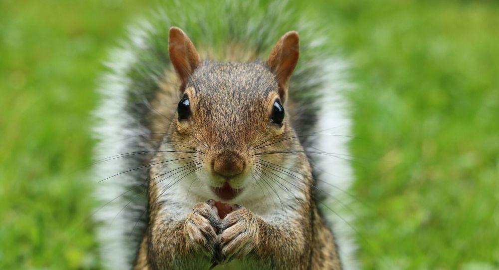 Des écureuils parviennent à déjouer les pièges placés par un ancien ingénieur de la NASA – vidéo